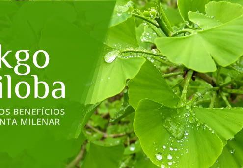 Ginkgo Biloba - planta milenar com benefícios para memória e circulação