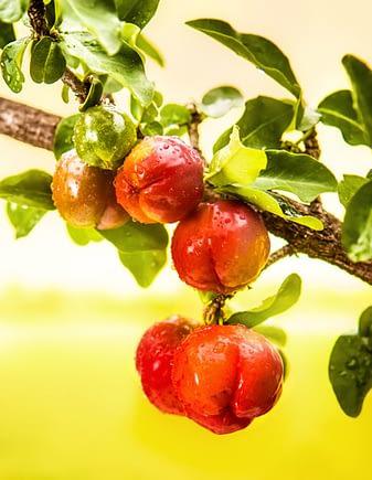 Acerola - fruta rica em Vitamina C